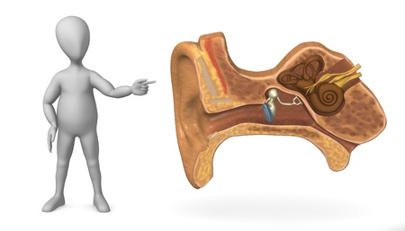 vestibular: 3d render of cartoon character with ear cut