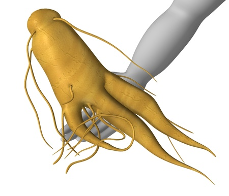 figourine: 3d render of cartoon character with ginseng Stock Photo