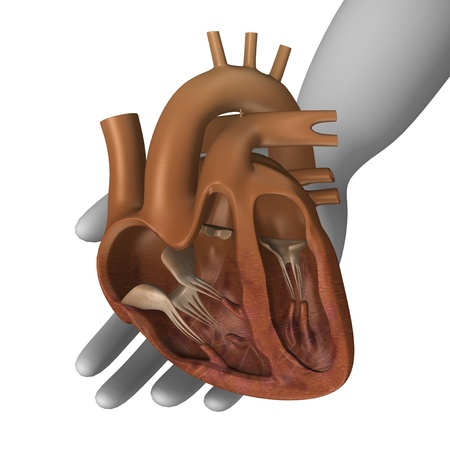 3d render of cartoon character with heart section photo