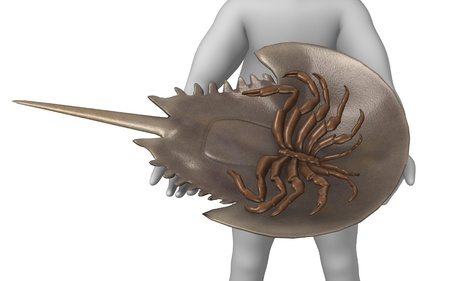 3d render of cartoon character with limulus animal photo
