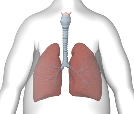 3d rendre of cartoon character with lungs Stock Photo - 12984747
