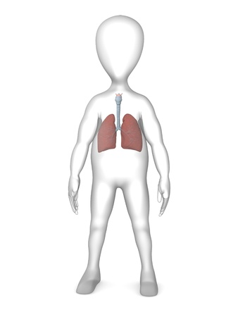 lung bronchus: 3d rendre of cartoon character with lungs