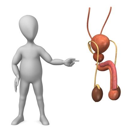 scrotum: 3d rendering di personaggio dei cartoni animati con riproduttivo maschile