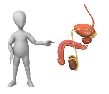 testes: 3d render of cartoon character with male reproductive Stock Photo