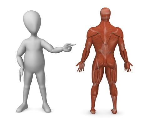 3d render of cartoon character showing human muscle system Stock Photo - 12984716