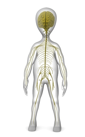 3d render of cartoon character with nervous system Stock Photo - 12967662
