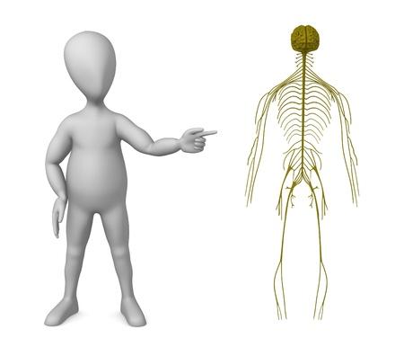 sistema nervioso central: 3d rinden de personaje de dibujos animados con el sistema nervioso
