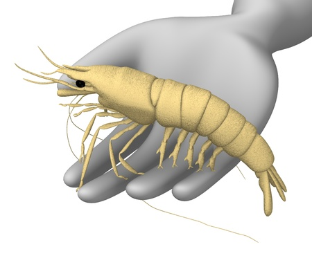 3d render of cartoon character with prawn photo