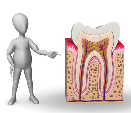 cementum: 3d render of cartoon character with teeth anatomy