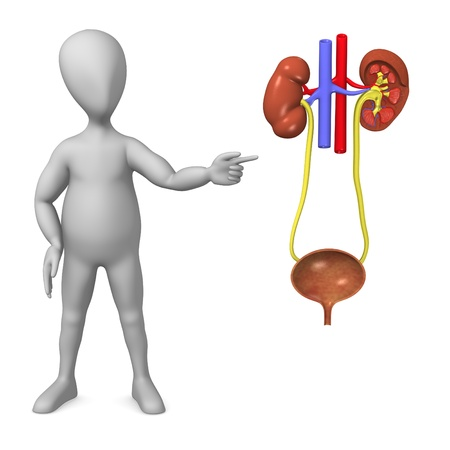 3d render of cartoon character with urinary system photo