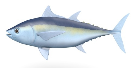 tuna fish: 3d render of blackfin tuna