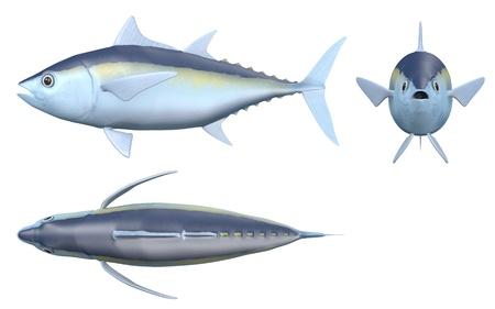 3D render van Blackfin tonijn Stockfoto
