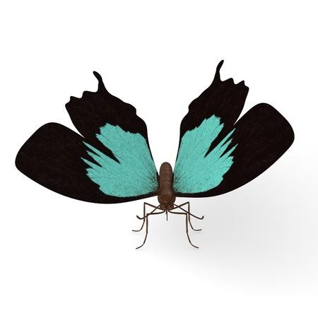 lepidopteran: 3d render of papilio ulysses