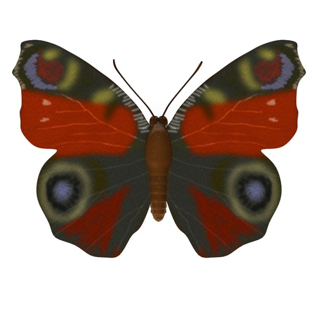 3d render of inachis io photo