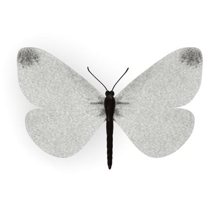 lepidopteran: 3d render of leptidea sinapis