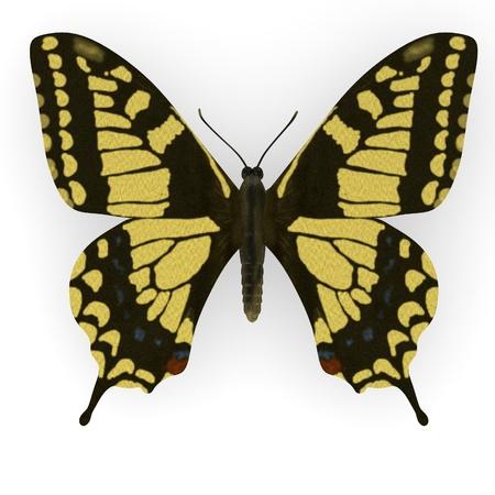lepidopteran: 3d render of papilio machao Stock Photo