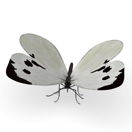 lepidopteran: 3d render of pieris brassicae