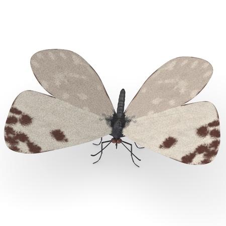 lepidopteran: 3d render of ontia daplidice