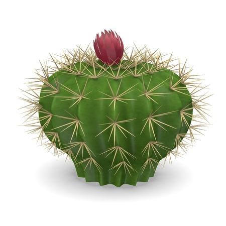 3d render of cactus flower photo