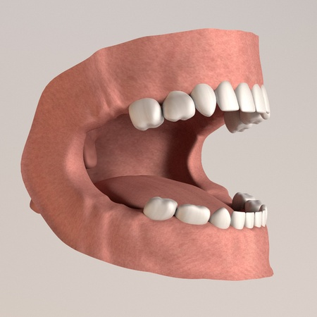 3d render of child teeth Stock Photo - 13730270