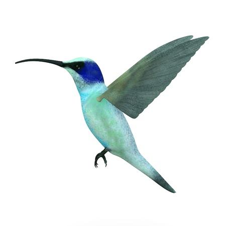 3d framför colibri fågel