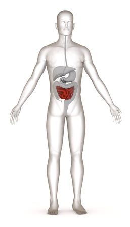 3d render of artificial character with digestive system Stock Photo - 13736494