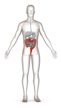3d render of artificial character with digestive system Stock Photo - 13736479