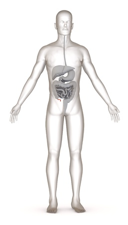 3d render of artificial character with digestive system photo