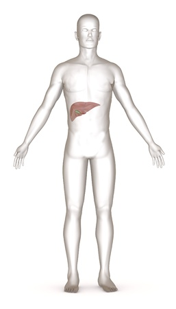 3d render of artificial character with liver Stock Photo - 13723070