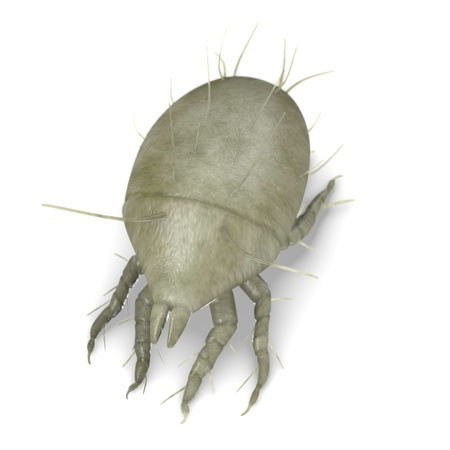 3d render of mite bug Stock Photo