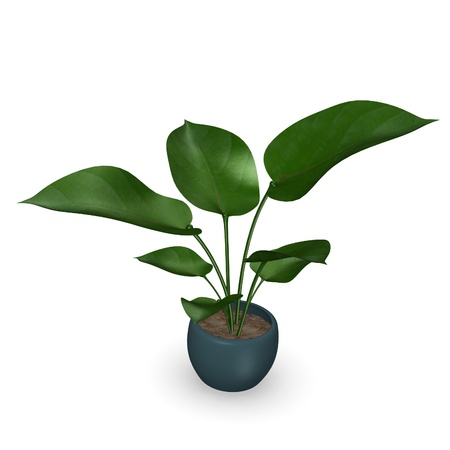 philodendron: 3d render of philodendron plant