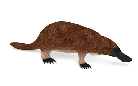 3d render of platypus animal Stock Photo