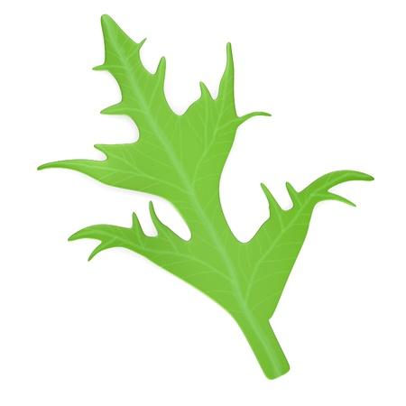 salat: 3d render of salad vegetable Stock Photo