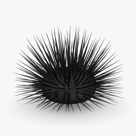 sea urchin: 3d render of sea urchin