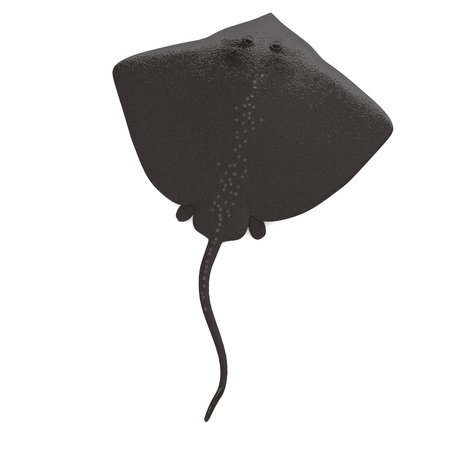 spotted ray: 3d render of stingray animal
