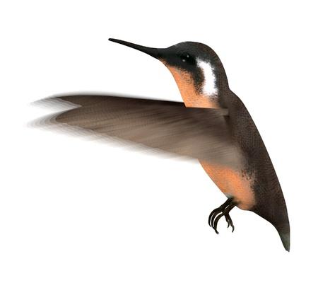 smallest: 3d  render of colibri bird