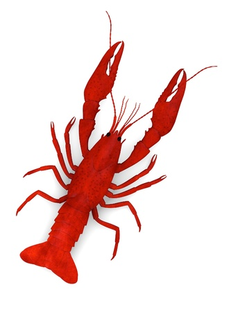 cray: 3d render of dead crayfish