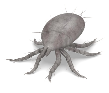 mite: 3d  render of mite bug