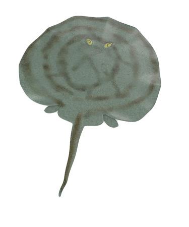 stingray: 3d render of  stingray animal