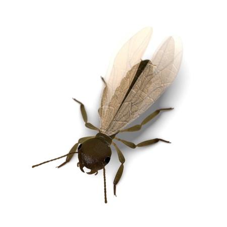 arthropoda: 3d  render of termite alate
