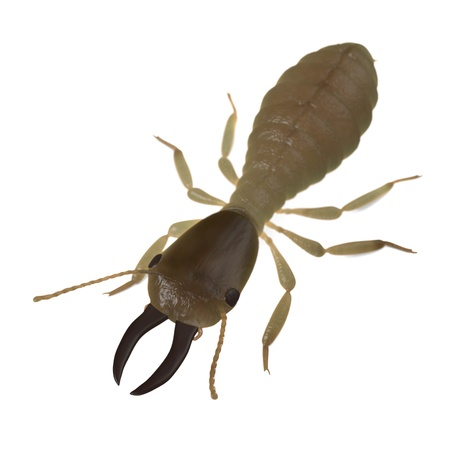 3d render of  termite soldier Stock Photo