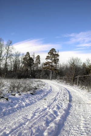 forest scenery in winter (snowy) photo