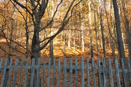 high dynamic range: forest scenery - autumn