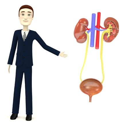 3d render of cartoon character with urinary system Stock Photo - 18051302