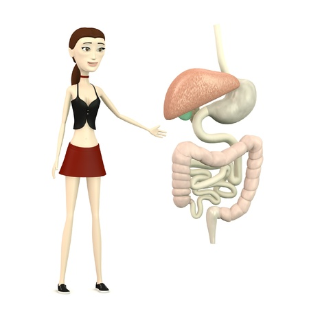 3d render of cartoon character with digestive system Stock Photo - 18452334
