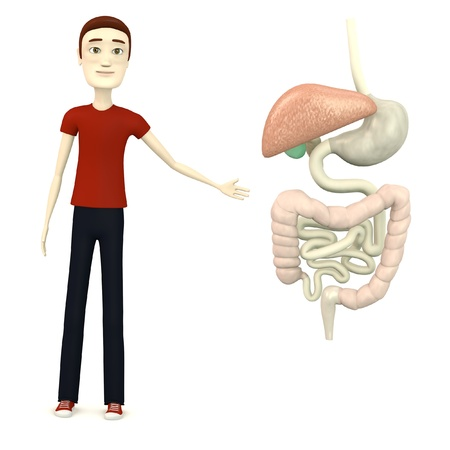 3d render of cartoon character with digestive system Stock Photo - 19553994