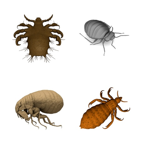 renders: collection of 3d renders - parasites