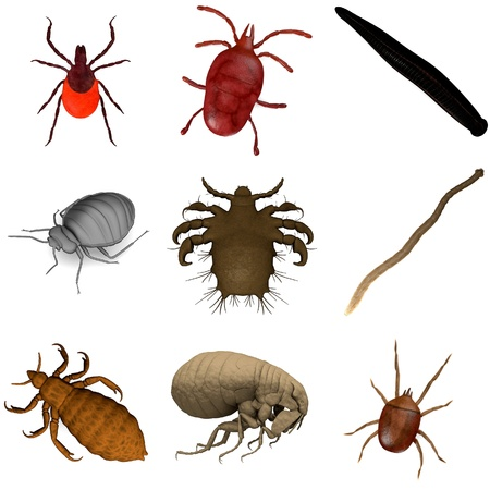 3 d レンダリング - 寄生虫のコレクション 写真素材