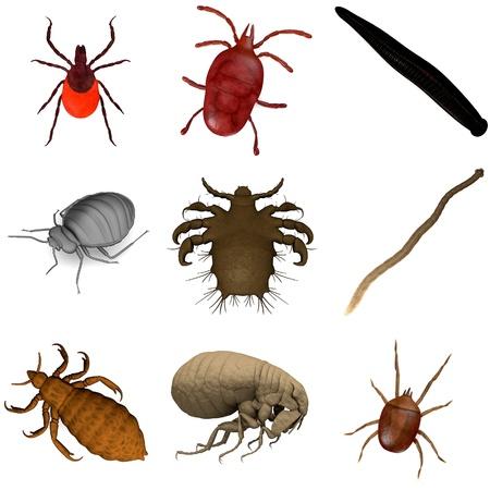 collection de rendus 3D - parasites