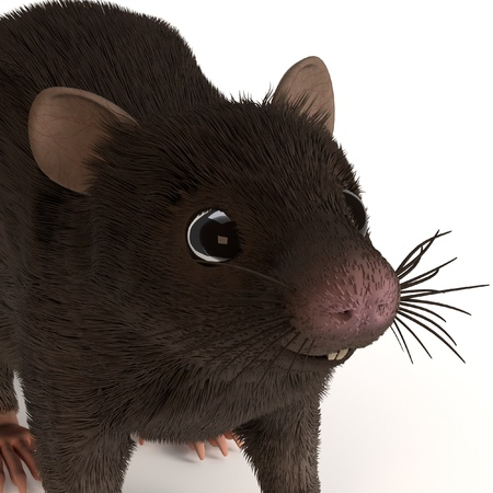 musculus: 3d render of mus musculus Stock Photo